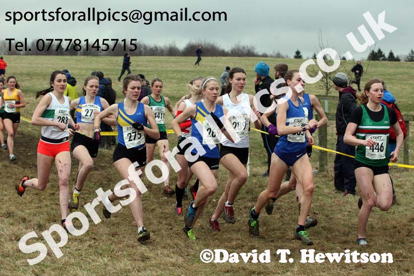 Senior women, 2018 Northern Cross Country Champs., Harewood House, Leeds. Photo: David T. Hewitson/Sports for All Pics